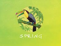 Spring - Toucan