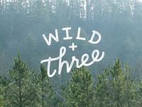 wild + three