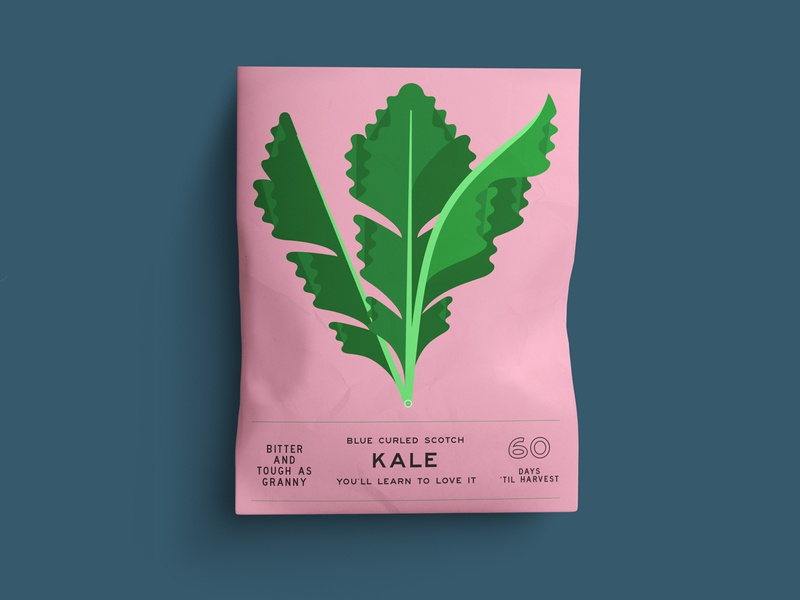KALE geometric kale botanical plant illustration food illustration food vegetable