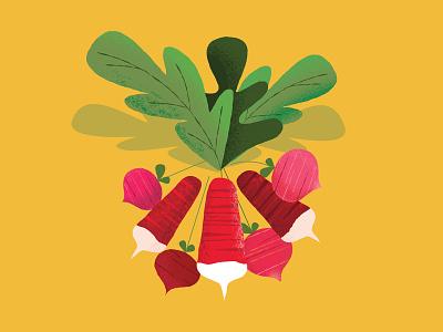Radish produce vegetable illustration radish