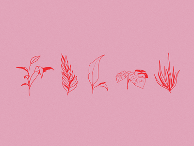 Plants Illustration