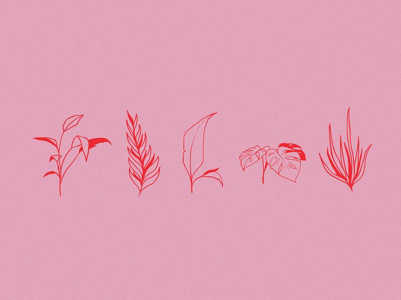 Plants Illustration