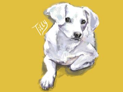 Tilly illustration digital painting digital art digital procreate dog illustration dog