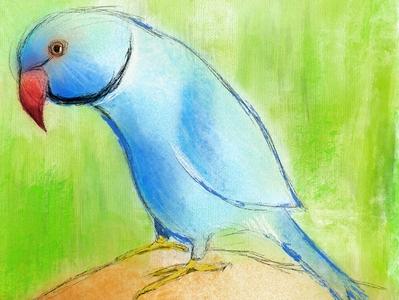 Aki the parrot