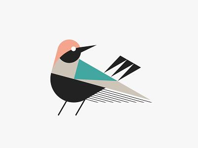 Finch modern bird nature animal simple illustration