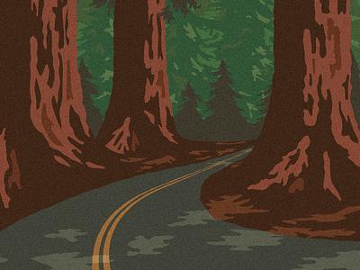 Forest Road road trees web design wpa redwood national park illustration