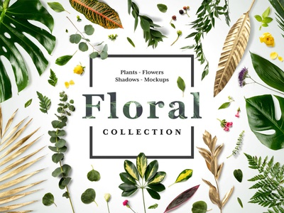 🌿 NEW! Floral Mockups Collection nature foliage stationery shadows mockupcloud isolated floral download logo presentation identity mock up branding mockup mock-up showcase brand psd branding template mockup