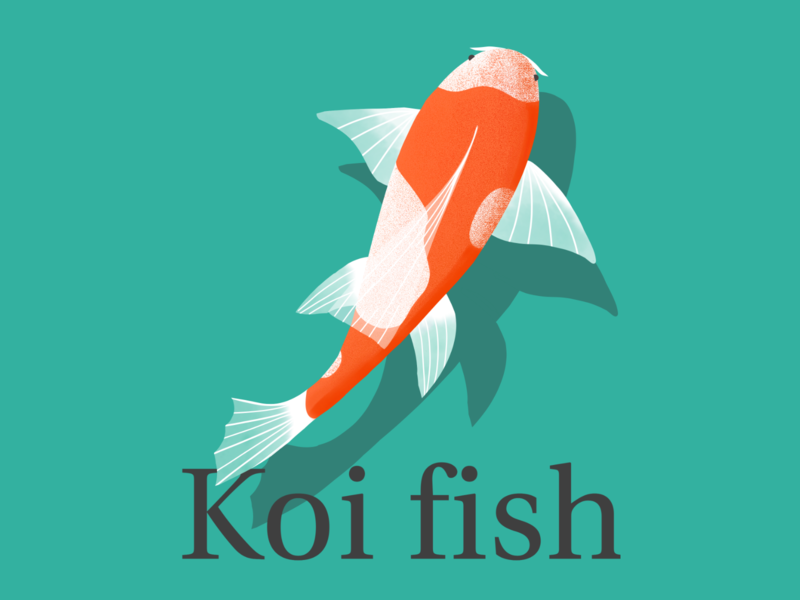 Koi fish gal shir inspired adobe fresco fresco adobe illustrator artist artwork art vector illustration