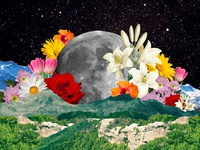 IN FULL BLOOM dream creative flower photoshop daily design inspiration space moon artist abstract colorful concept design nature graphicdesign creative direction stars art flowers collage