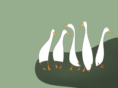 Five Ducks! illustrations illustration art illustrator design graphicdesign handdrawn illustration