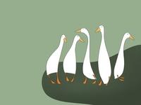 Five Ducks!