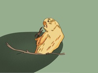 A little bird!