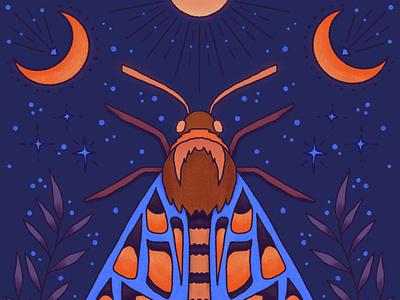 Moth orlando brush celestial lunar night sun moon illustration moth procreate