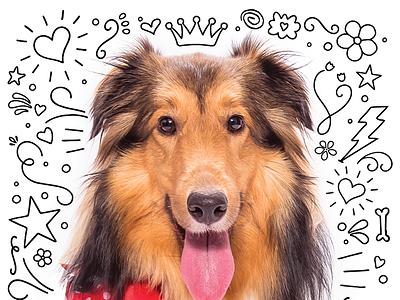 Puppy Doodles orlando magazine editorial pet puppy illustration doodle sheltie dog