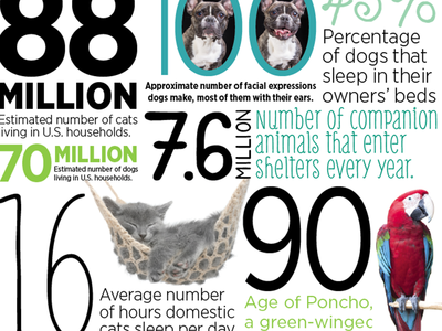 By the Numbers orlando magazine editorial typography facts infographics numbers pets