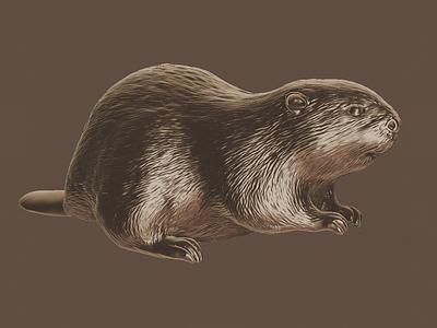Beaver zbrush 3d illustration 3d render 3d sculpt