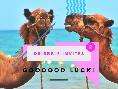 2 Dribbble Invites photography camels draft day dribbble invites