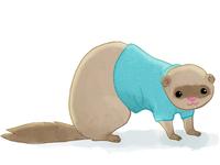 Ferret in a sweater