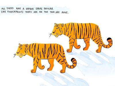 Tiger stripes animal tiger illustration digital