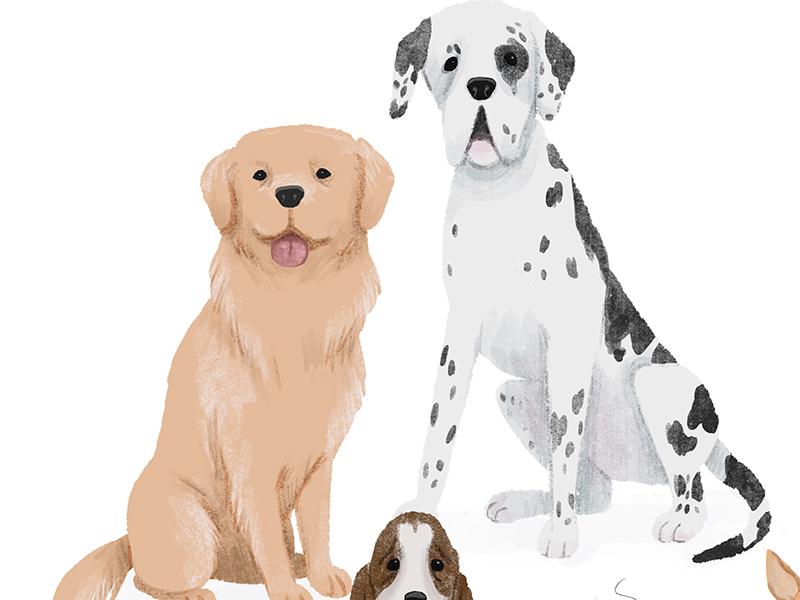 150315 dogs dribble