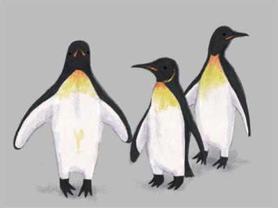 Penguins illustration digital drawing