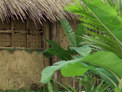 Tropic scene 3D rendering cg rendering 3d max mental ray maya onyx tree vue hdri house