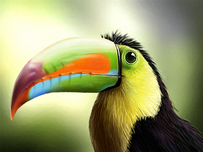 Tucano Photorealistic Digital Painting bird photorealistic digital painting photoshop drawing art tropic animal toucan tucan