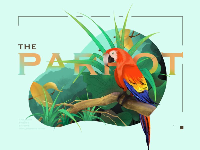 The parrot parrot bird procreate animal design illustration