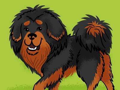 Tibetan Mastiff dog tibetan mastiff doggust illustration