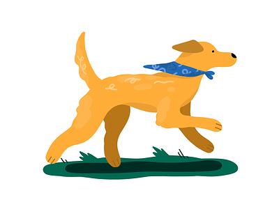 Golden Boy icon procreate digital editorial illustration illustrator golden retriever dog