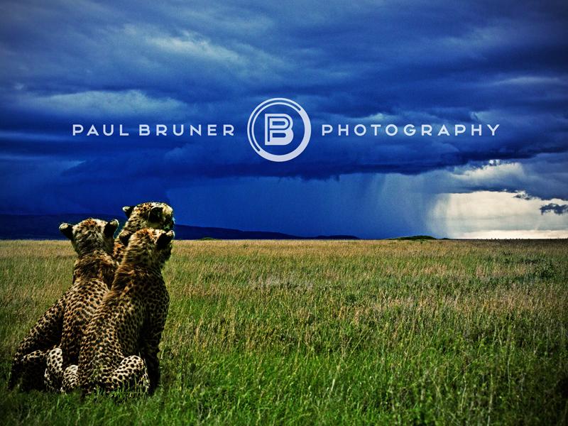 Paul b logo drib