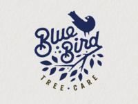 Bluebird 1 alt