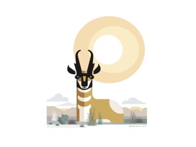 Pronghorn Antelope_drib