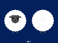 Sheep for birth