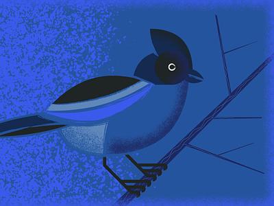 Graphic Bird Illustration experiential egd environmental graphics animal illlustration bird design illustration brand vector logo typography branding graphic design