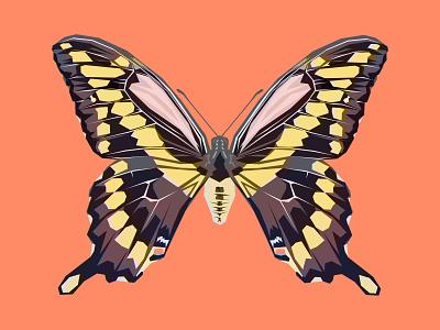 Geometric Butterfly Illustration environmental graphics changethethought denver graphic art icon design icons iconography adobe illustrator vector graphics vector art design brand vector illustration logo typography branding graphic design
