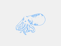 Sad 'Lil Squid Illustration