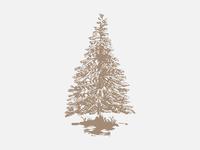 Spruce Tip