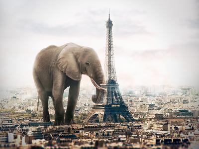 An Elephant In Paris