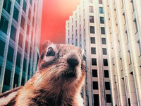 Squirrel in the city