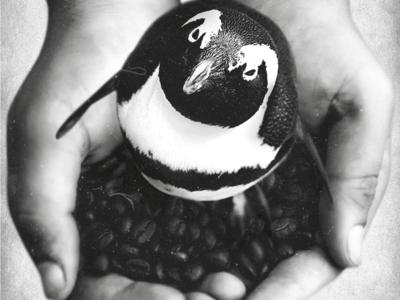 Penguin in hands