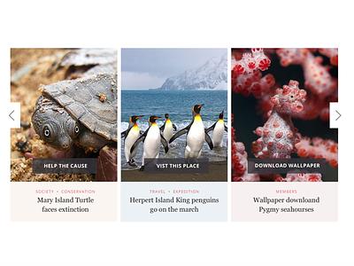 Australian Geographic Cards Carousel swipe turtle penguins cards design design ui cards carousel