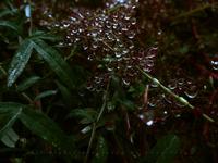 Dews and Rains