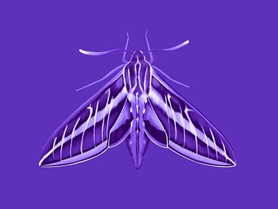 Sphinx Moth digital illustration bug catcher moth sphinx moth design ipadpro cute illustration