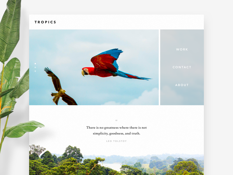 tropics clean simple minimal plant tree bird parrot jungle ui