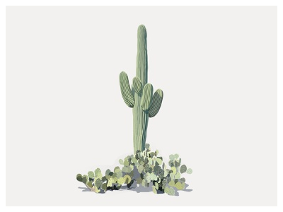 Saguaro nature illustrator art illustration