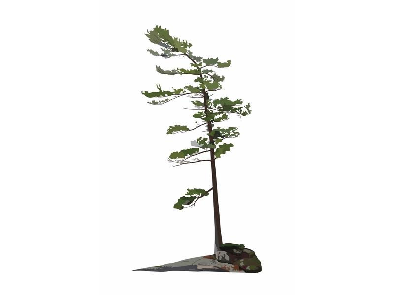 Great White Pine design flat illustration