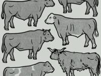 Livestock Steak Stack