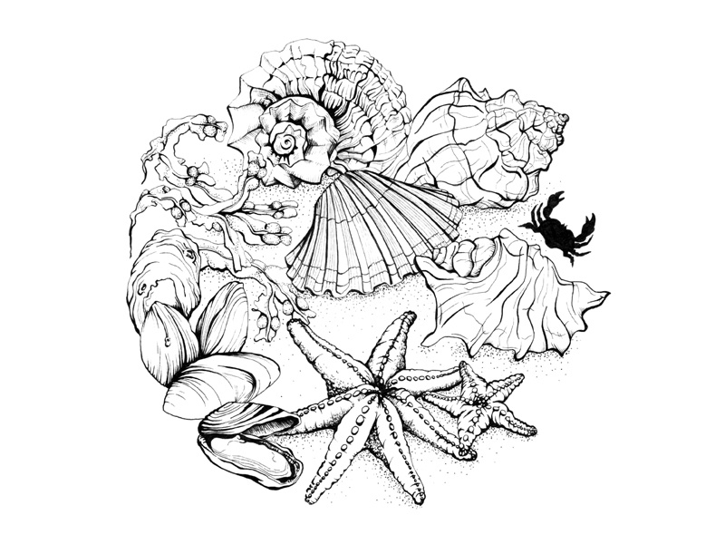 Sea Shells - 2017 Pen Illustrated Calendar illustration calendar nature circle sketching drawing black and white pen and ink beach sea sea shells