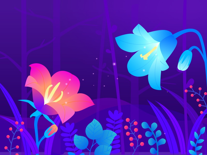 Hello Dribbble! forest firefly night flowers illustration shot first dribbble debut